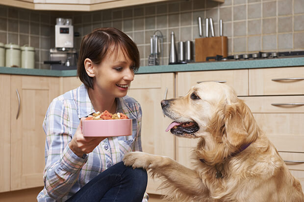 ¿Cómo alimentar a mi perro?