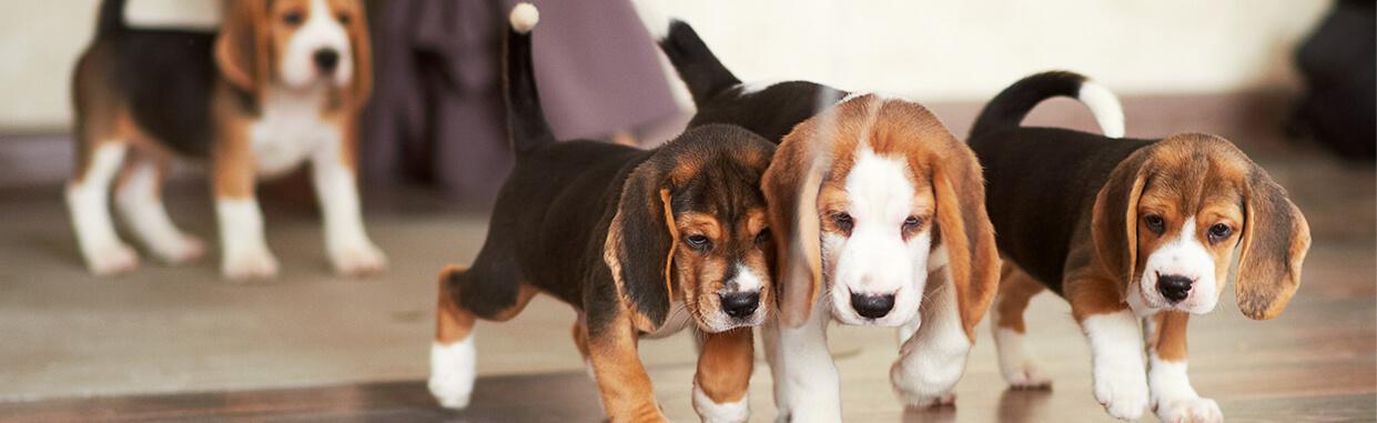 6 beneficios de jugar con tu perro en familia