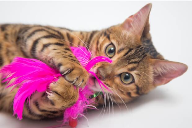 Aprende a hacer un dispensador de premios (treats) para gatitos