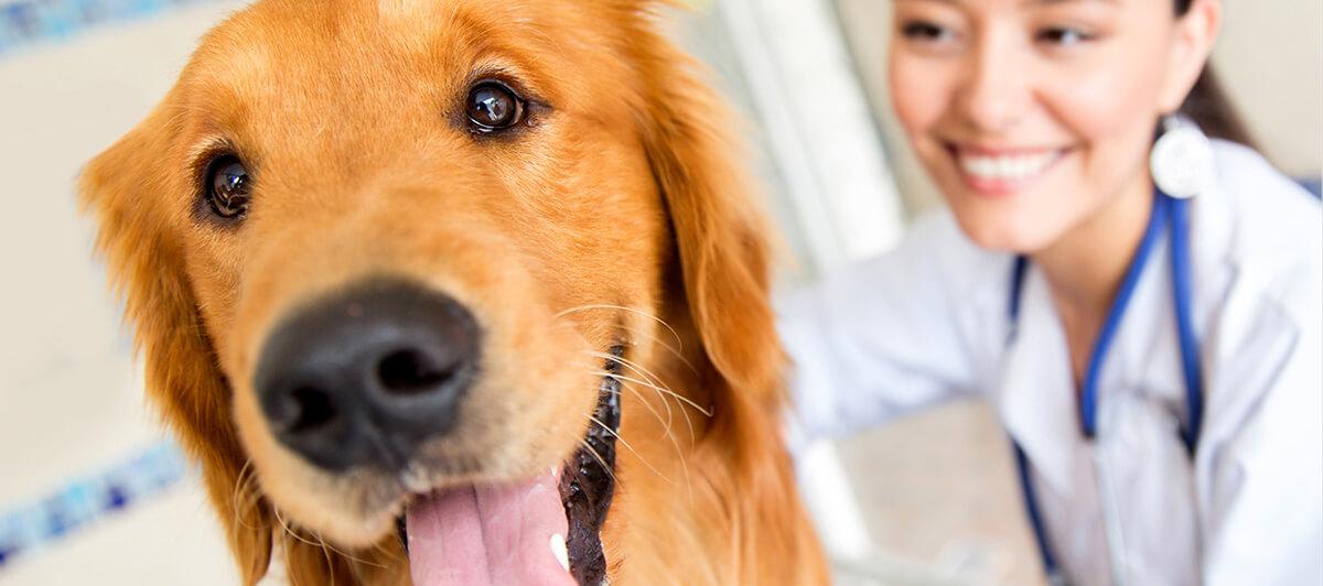 Guía para el cuidado de tu perro
