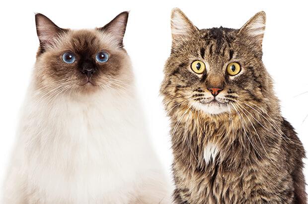 ¿De dónde vienen los gatos?