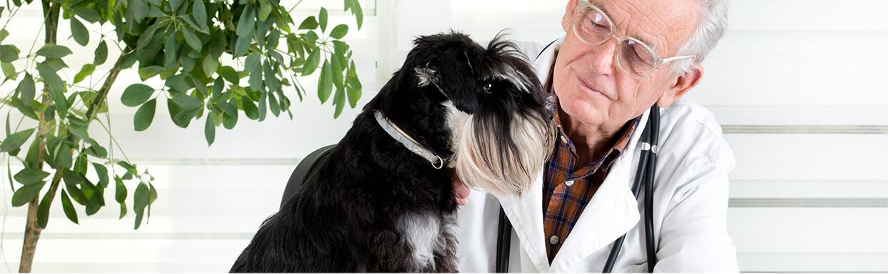 Conoce sobre los cuidados para  tu perro mayor de 7 años