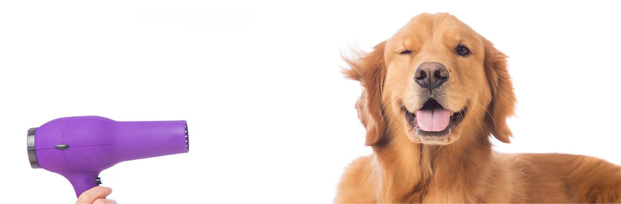 Cómo hacer que tu perrito huela bien