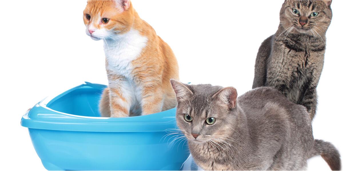 ¿Cómo vivir con varios gatos?