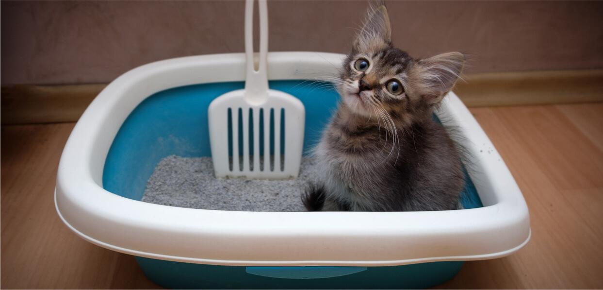 Consejos para adoptar un gatito