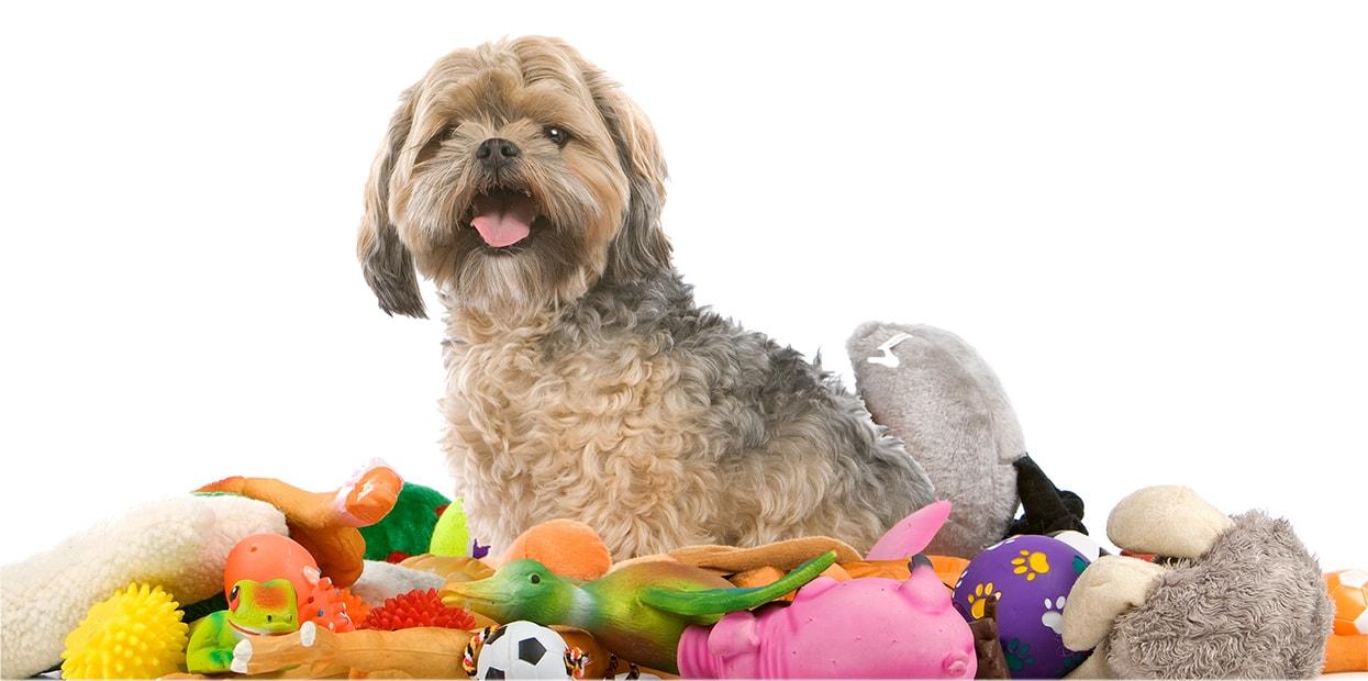 Los mejores juguetes para tu perro
