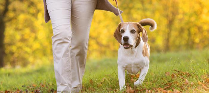 Diviértete paseando a tu perro