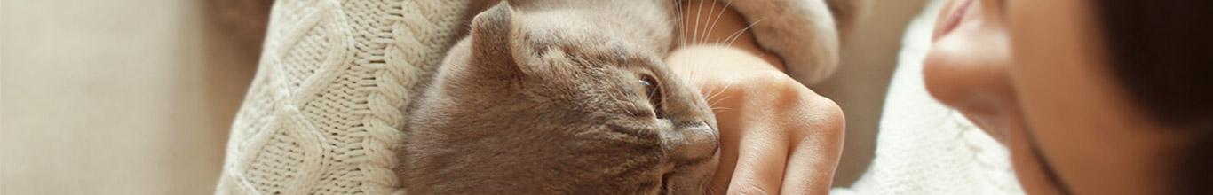 Los gatos son más amorosos de lo que pensabas