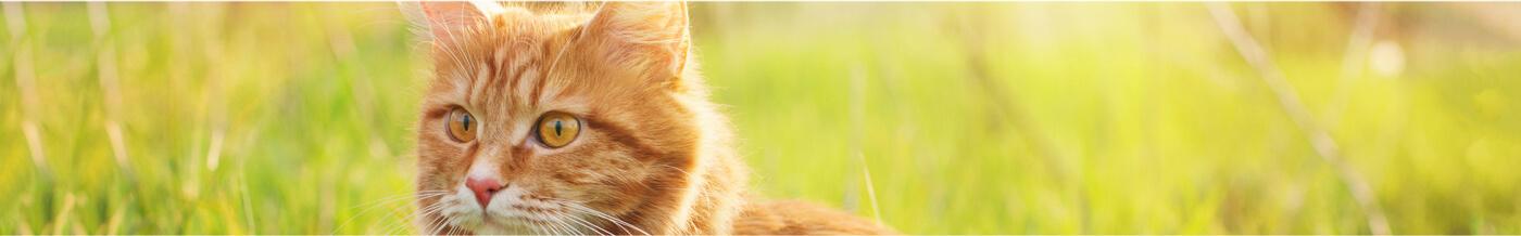 Elige el nombre apropiado para tu gato