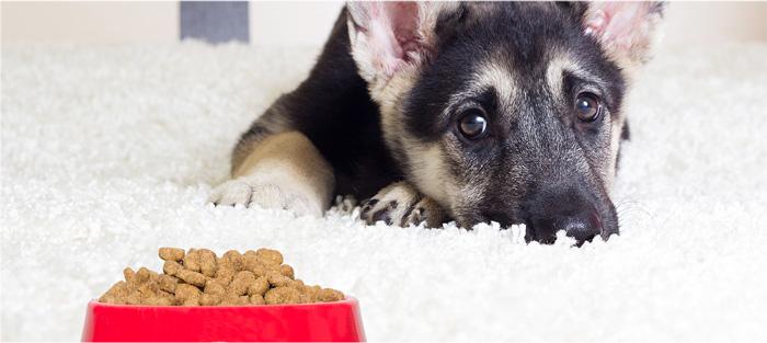 ¿Por qué mi cachorro no quiere comer?