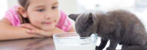 ¿Mi gatito podrá tomar leche de vaca?