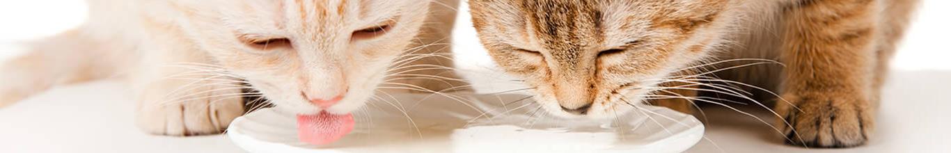 ¿Es buena la leche de vaca para tu gatito?