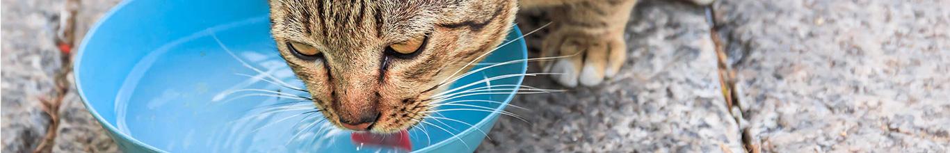 ¿Cómo saber si mi gato se está hidratando correctamente?