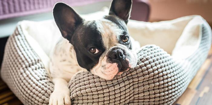 Síntomas de aburrimiento en los perros y cómo prevenirlos