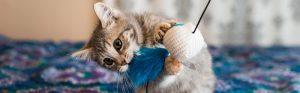 gato con juguetes