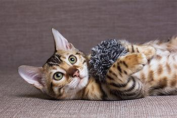 Ejercicios caseros para gatos
