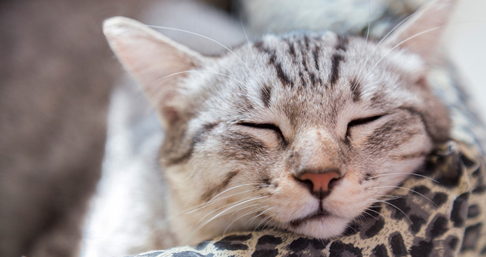 Pasos para enseñar a tu gatito a dormir en su cama