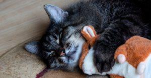 ¿Dónde debe dormir un gatito?