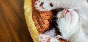 Cómo enseñarle a un gatito a dormir en su cama