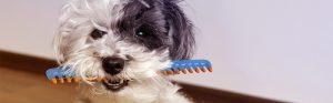 perro con cepillo