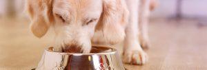 perro alimentándose