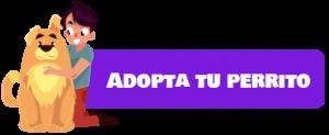 boton-adopta