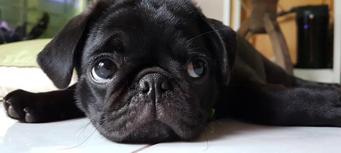 cachorro_llora_1