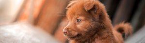 cachorro_llora_2