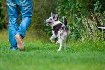 Entrenamiento básico para perritos