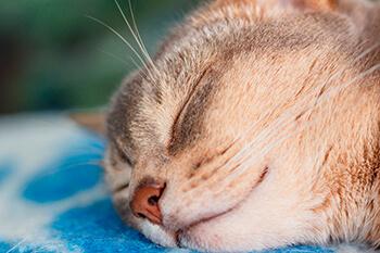Bolas de pelo en los gatos