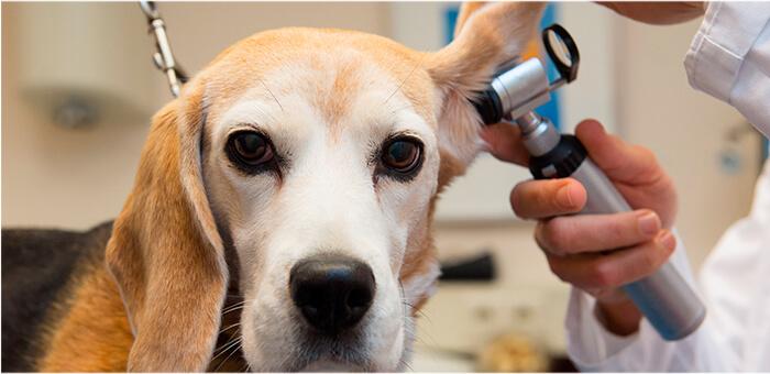 ¿Por qué es importante la limpieza de orejas?