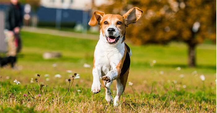 Pro-can gran fuente de energía
