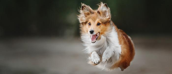 ejercicios_perros_1
