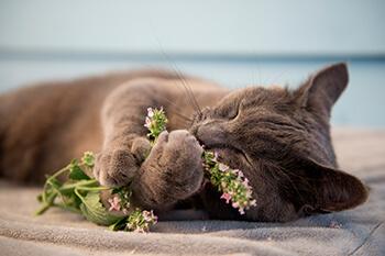 Plantas adecuadas para tu gato