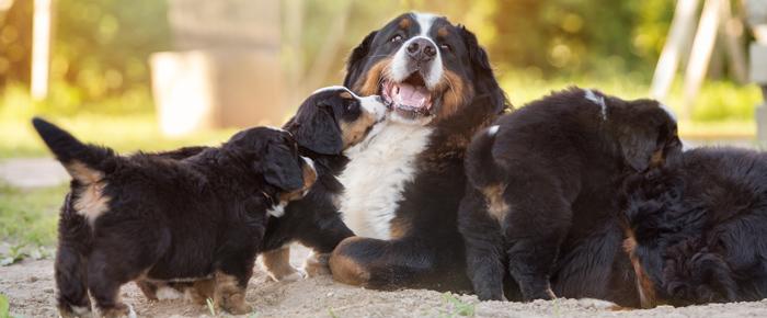 cachorros_madres_1