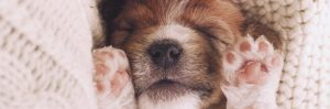 cachorros_madres_2