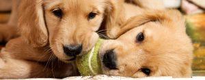 cachorros_madres_3