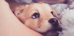cachorros_madres_5