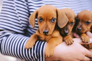 cachorros_madres_portada