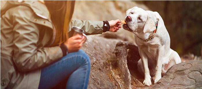 ¿Cómo darle carne a tu perro?