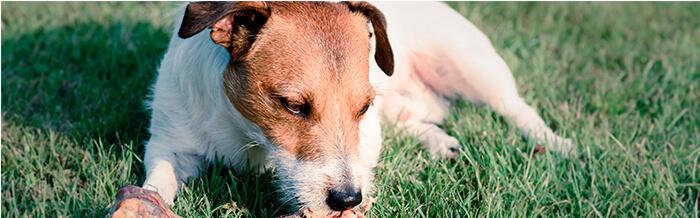 ¿Mi perro puede comer carne?