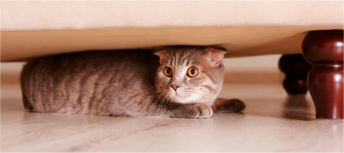 ¿Por qué a mi gato no le gustan las visitas?