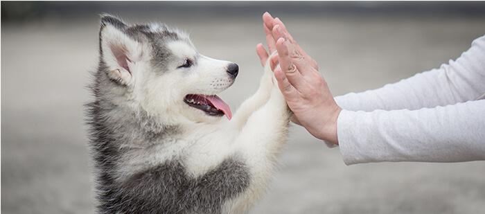 Tips para educar a tu cachorro