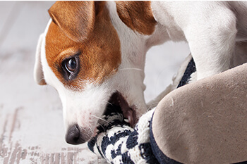¿Cómo evitar que mi cachorro muerda las cosas del hogar?