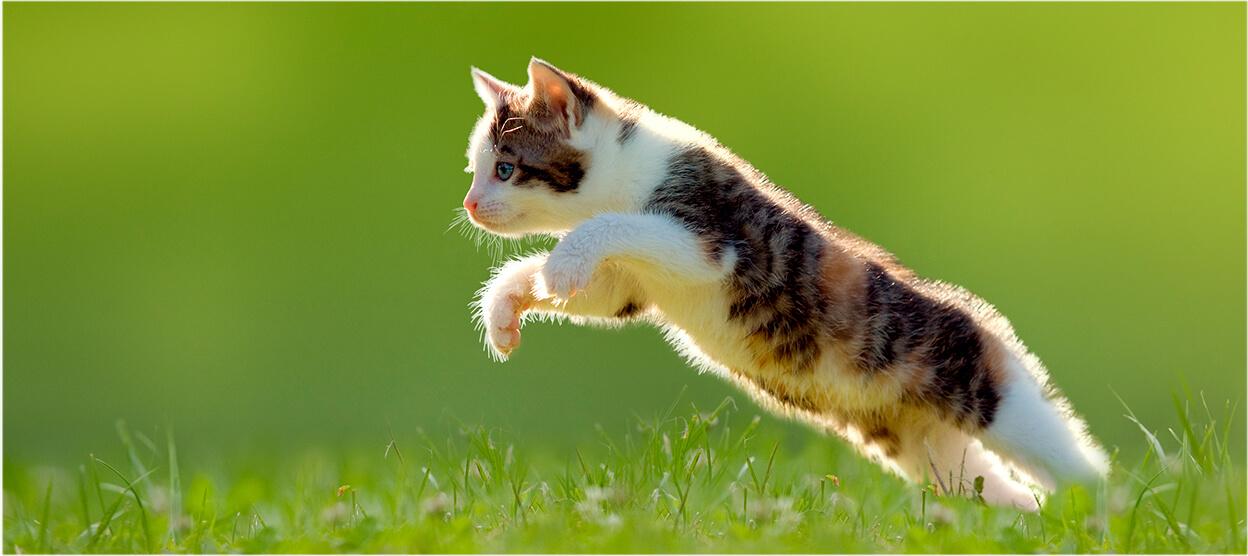 Consejos para vivir con un gatito muy activo