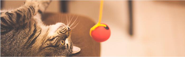 Los gatitos aman golpear los objetos que están colgados