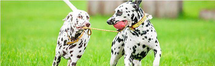 Cuando tu perrito tenga miedo, no lo abraces, acaricies ni hables en actitud protectora