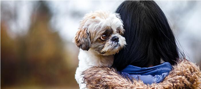 Los perritos tienen miedo a factores que como humanos no sentimos