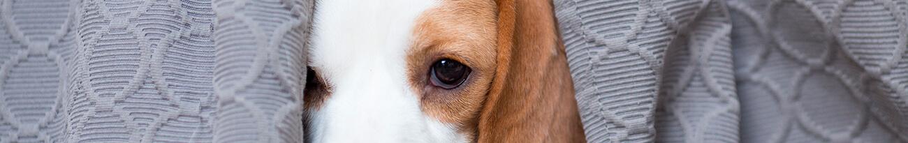 Aprende a relacionarte con un perrito temeroso