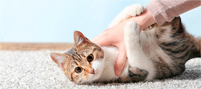 Es muy importante que las porciones sean las adecuadas según la edad del gatito